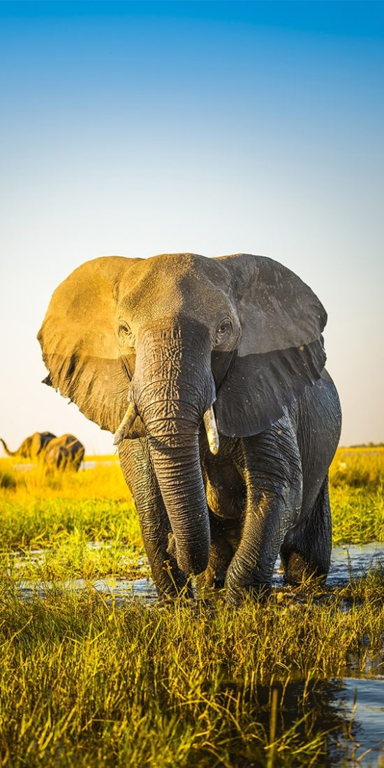 Best Botswana Safaris & Tours