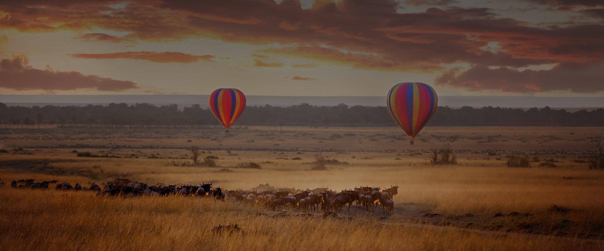 Best African Safaris Experience