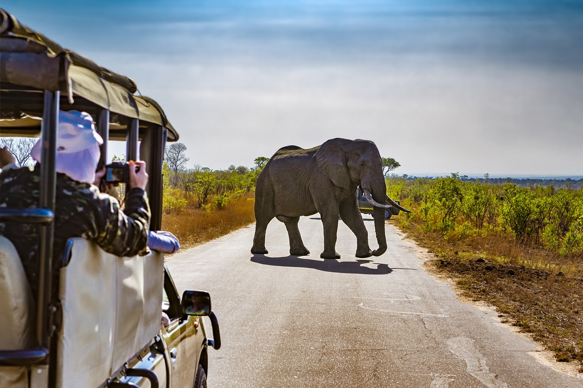 Top Safari Destinations in Africa