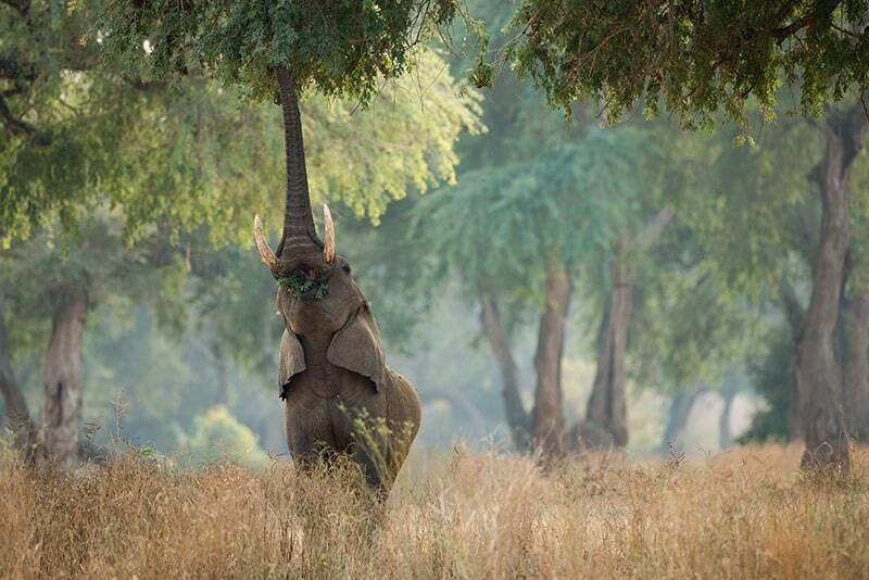 Elephant at Mana Pools in Zimbabwe